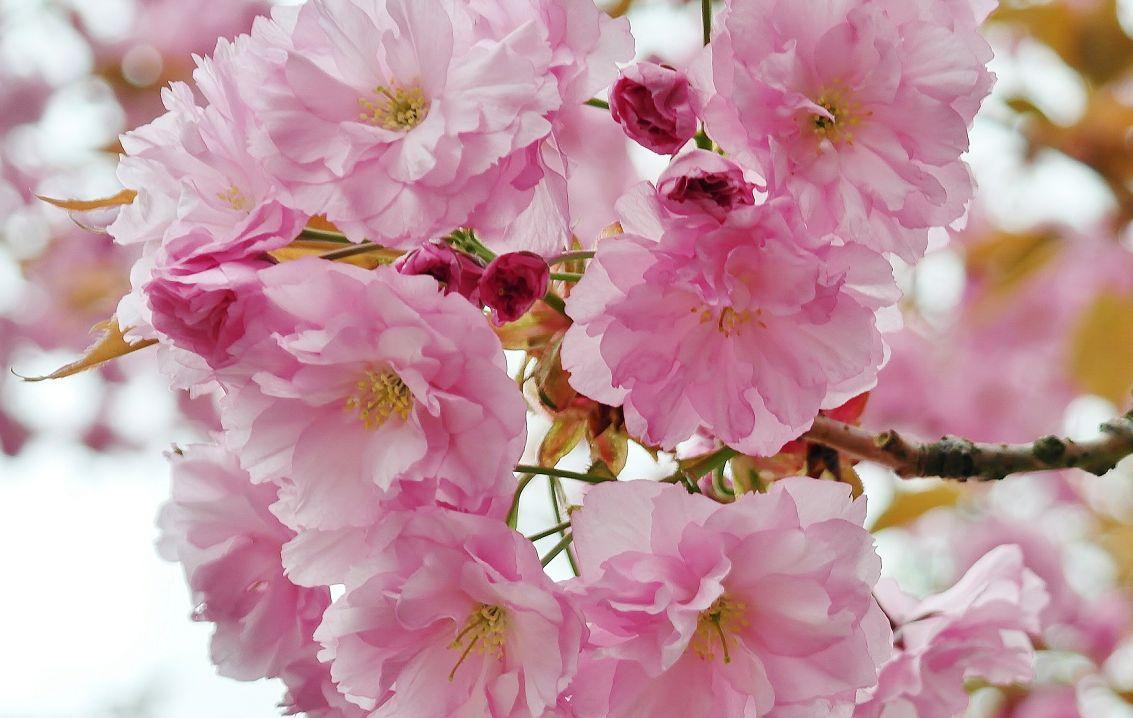 叶子看起来特别的漂亮,特别有生命力,就像是被上帝亲吻过一样