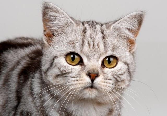 宠物猫的一天,动如脱兔惹人喜爱