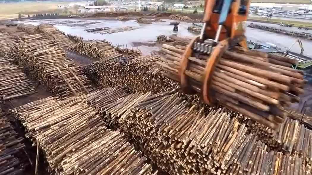 实拍大型木材厂加工木头,整车的木头进去出来就是成品木材