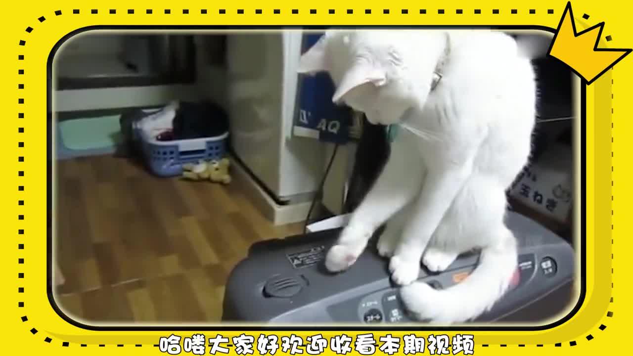 铲屎官发明新游戏,猫咪竟陪着玩了一天,网友:可以组队打手游了