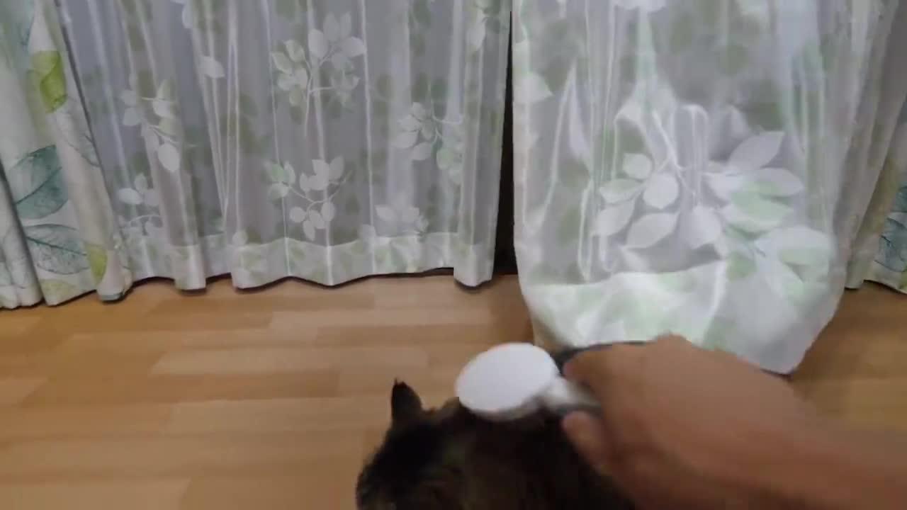 正在看风景的大脸猫,回头发现拿梳子的主人:你终于来了