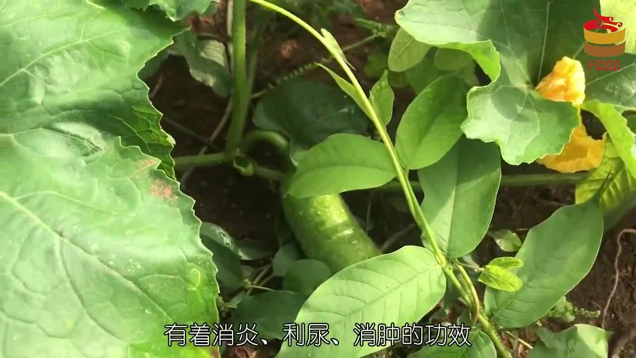 冬瓜和它不能一起吃,现在了解还来得及,别再无知