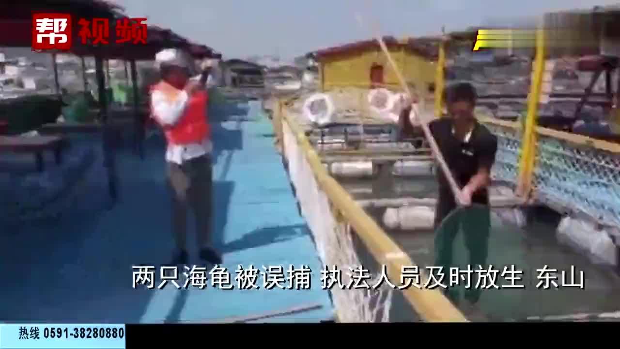 渔民出海捕鱼误捕两只海龟执法人员及时放生