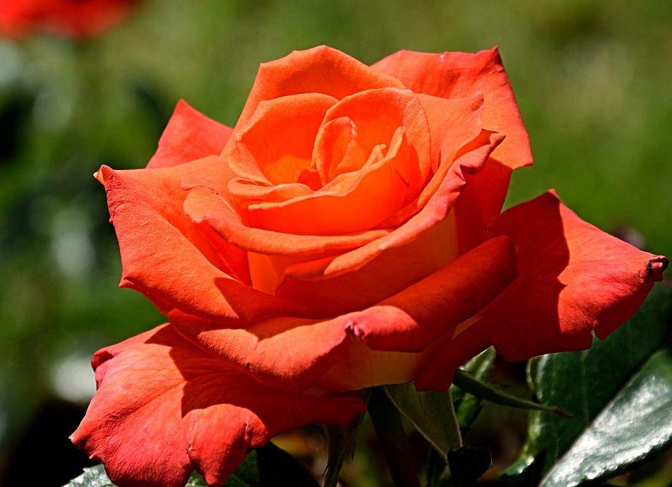 花瓣特别鲜艳好看,看起来如童话一样美好,太让人喜欢了!