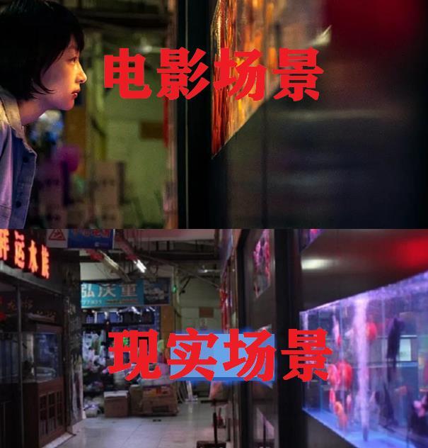 少年的你:电影vs现实场景,鱼缸完美还原,看到小北家泪目了