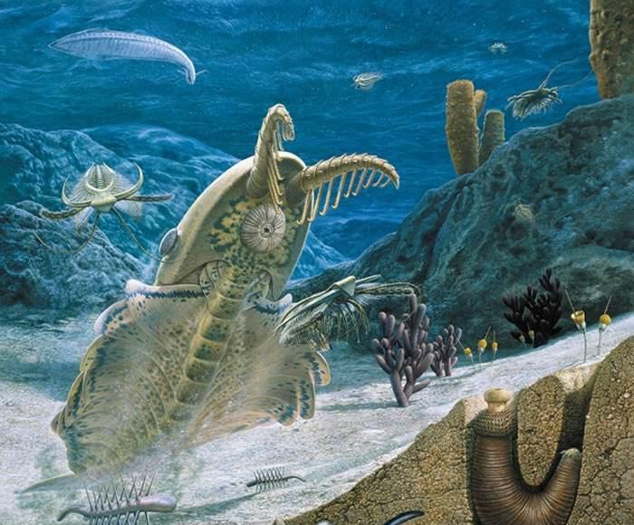 寒武纪物种大爆发,直击达尔文进化论漏洞,它到底出了什么问题?