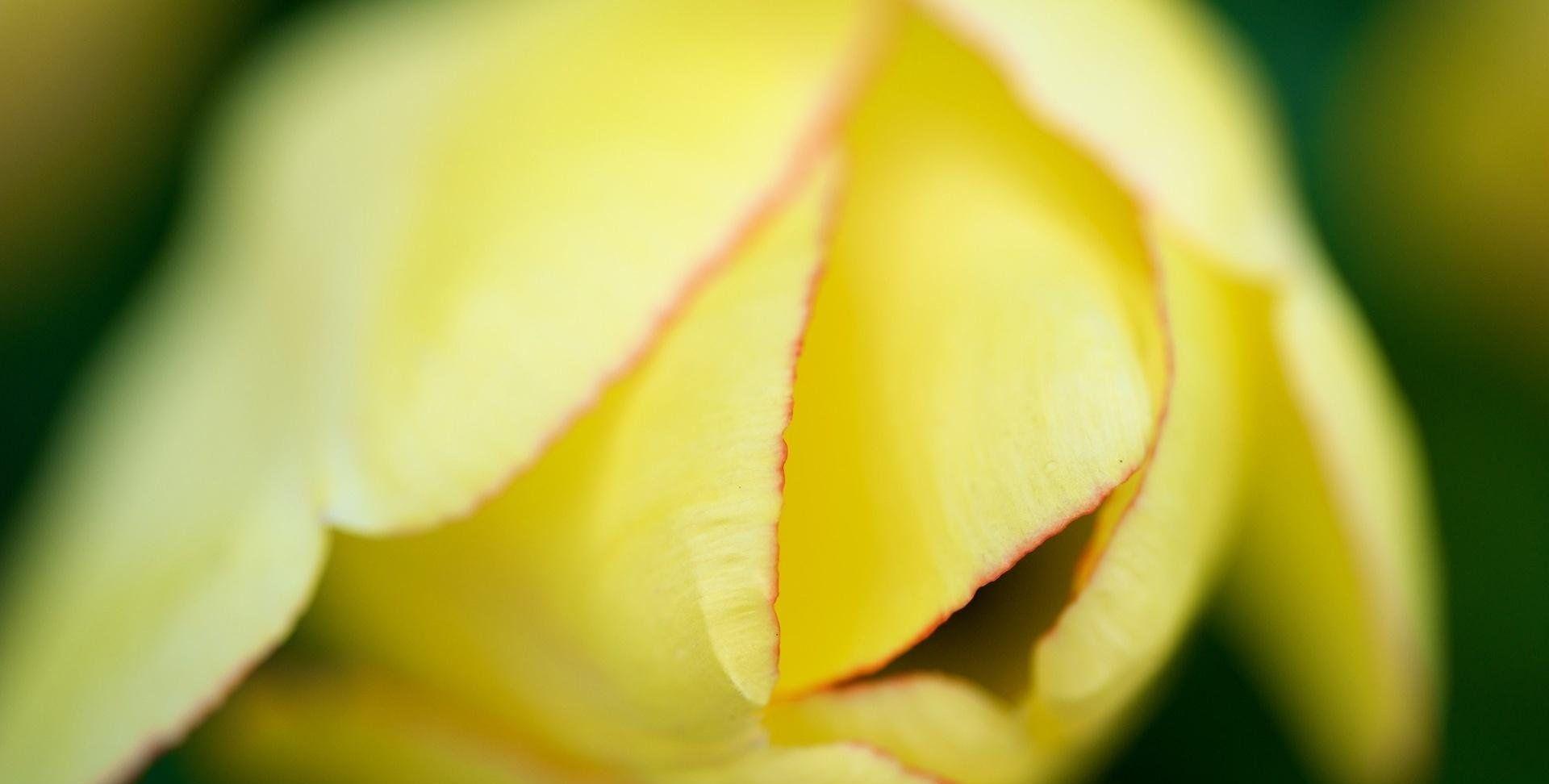 清新护眼植物高清图片桌面壁纸,分辨率:1920x1080