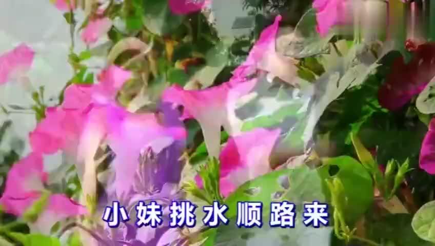 贵州山歌杨晶晶妹像荷花一样红生在碧绿池塘中