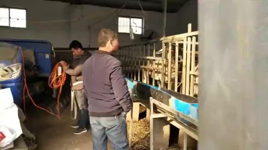 河南大哥院里养牛养羊羊16元一斤一只羊1000左右买一只过年