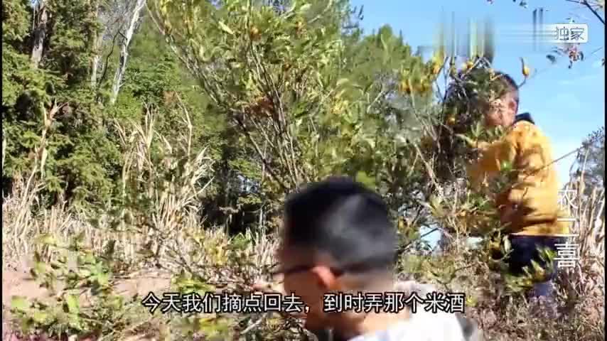 咳嗽咽喉肿痛不用慌农村野生黄栀子也许能帮助你一起看看吧