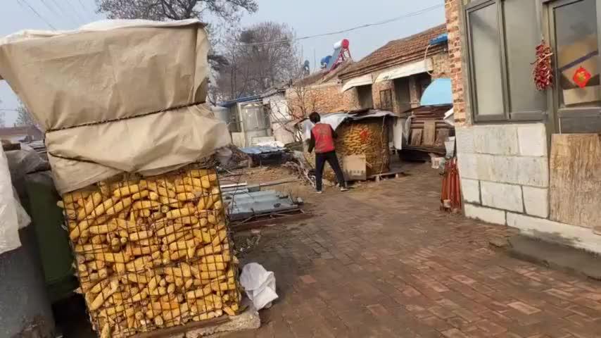 老爷子为一分差价玉米没卖成昨天一场雨都淋湿婆婆后悔没处理