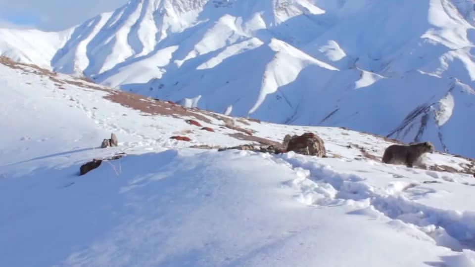 珠穆朗玛峰最著名的一具尸体长达年为何无人掩埋