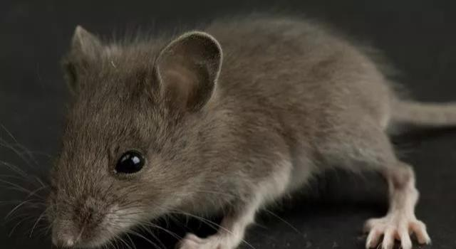 72年鼠人,明天过后,幸福的生活,就要开始了,别不信