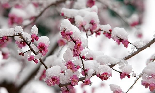 """飞雪带春风:冬日品读""""咏雪""""诗,共同品读""""雪文化"""""""
