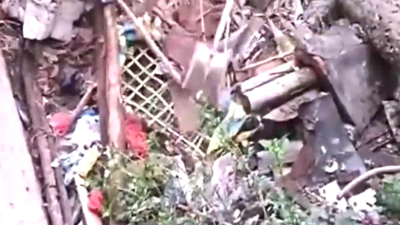 在垃圾废墟中翻出一条大蟒蛇,众人合力才将其拉出