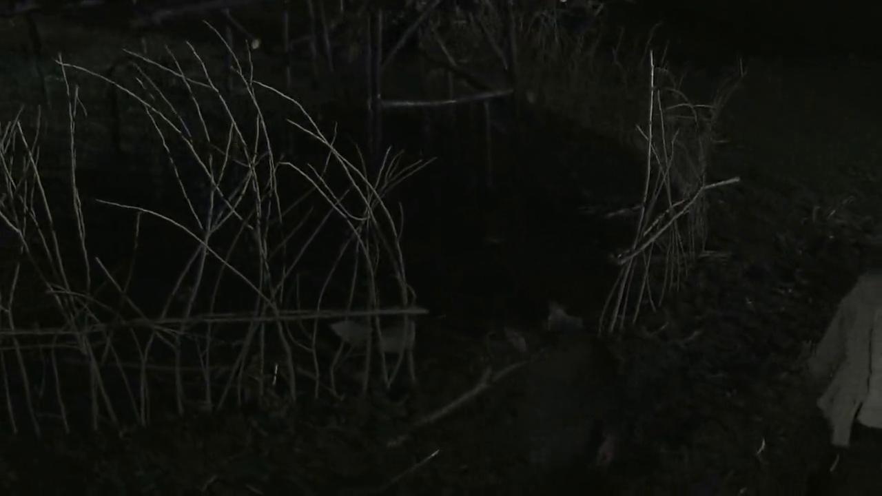 民兵葛二蛋:葛二蛋去抱了一张草席,回来竟发现草屋被烧了