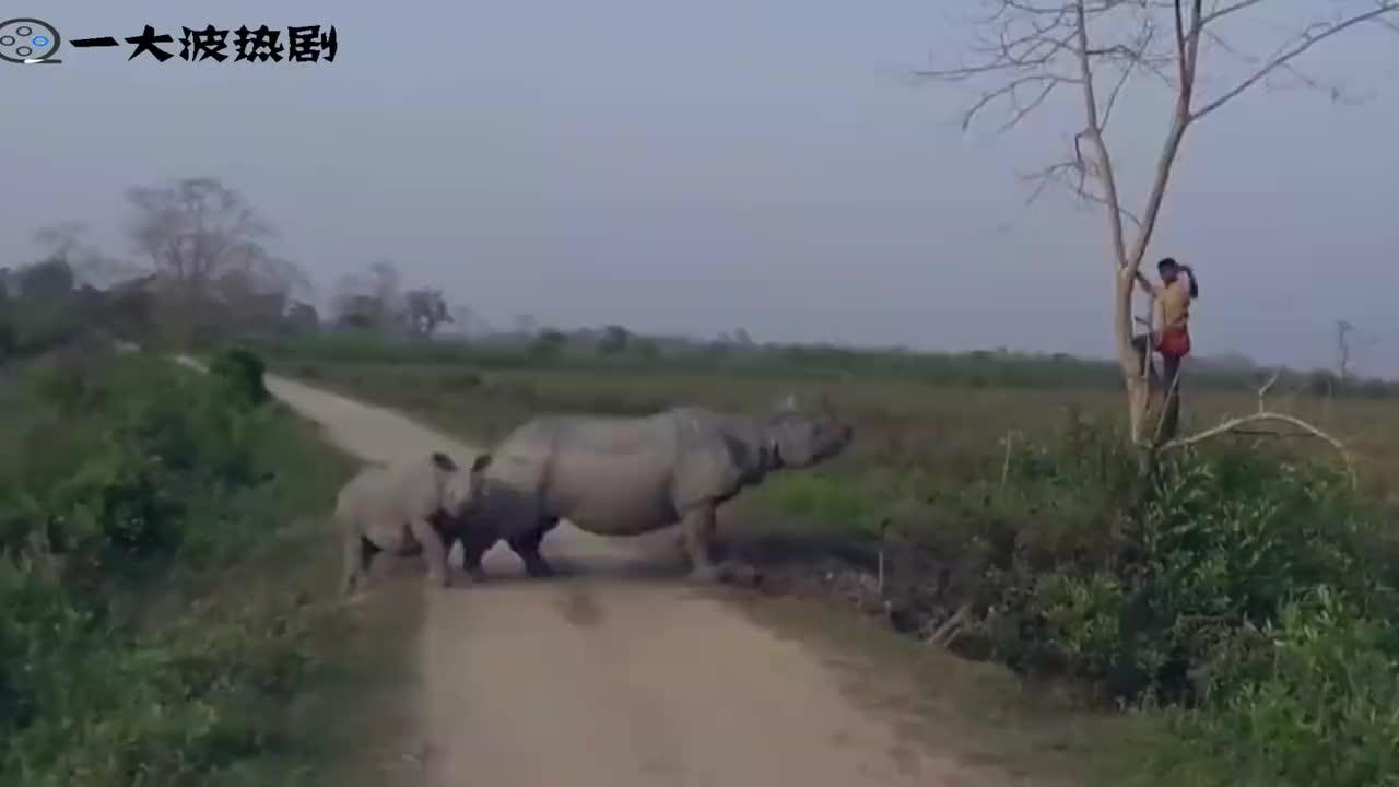 男子作死爬上树看犀牛接下来的画面让人意外镜头记录刺激画面