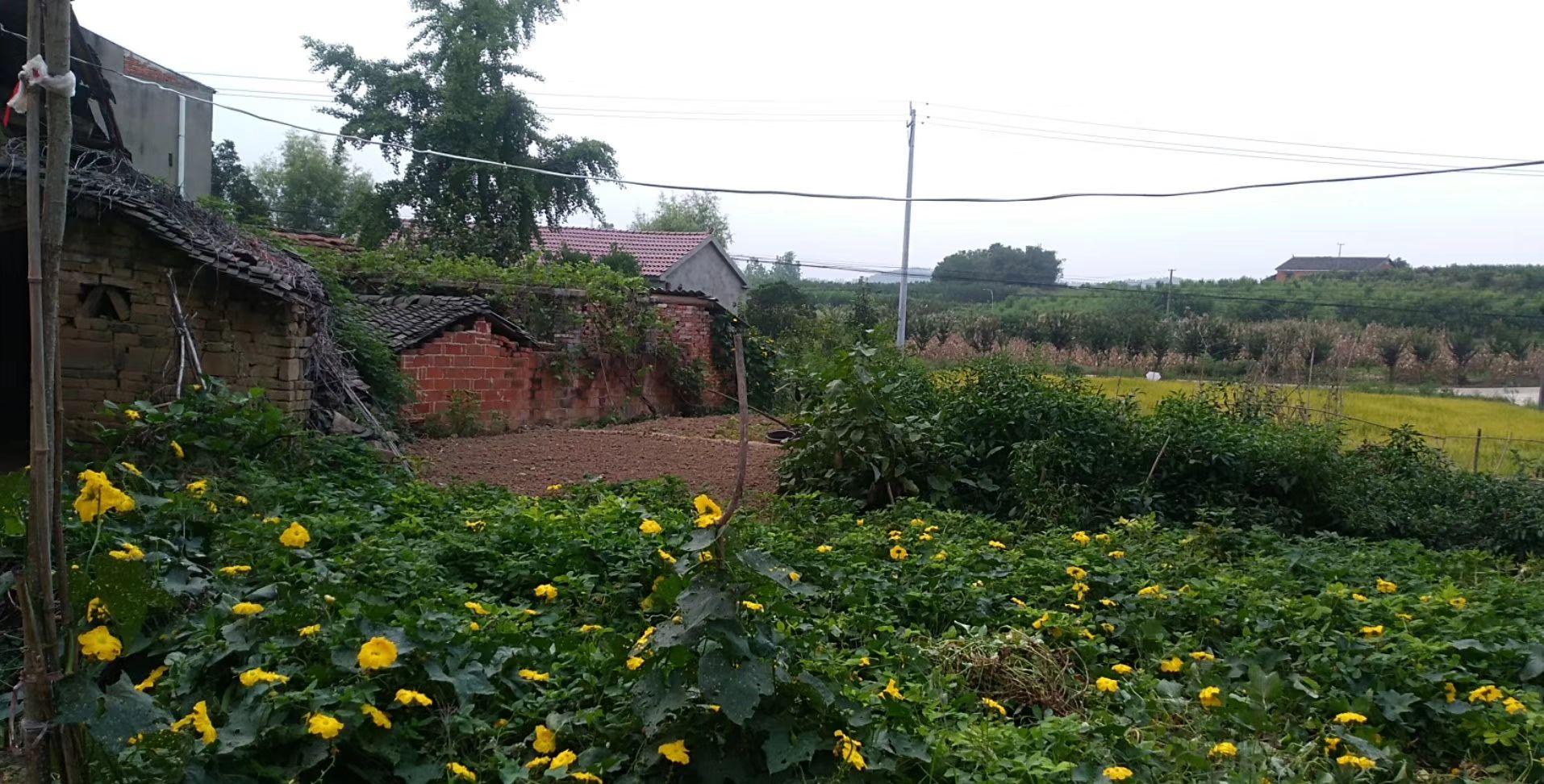 等我们退休了,到村子里,享受这大自然的美!!