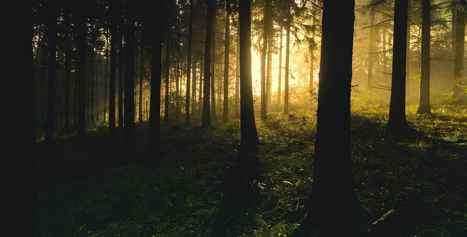 那些透进树林的阳光,暖暖的温馨!