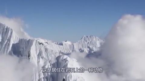 西藏这一雪山未解之谜真实存在科学家无法解释真因