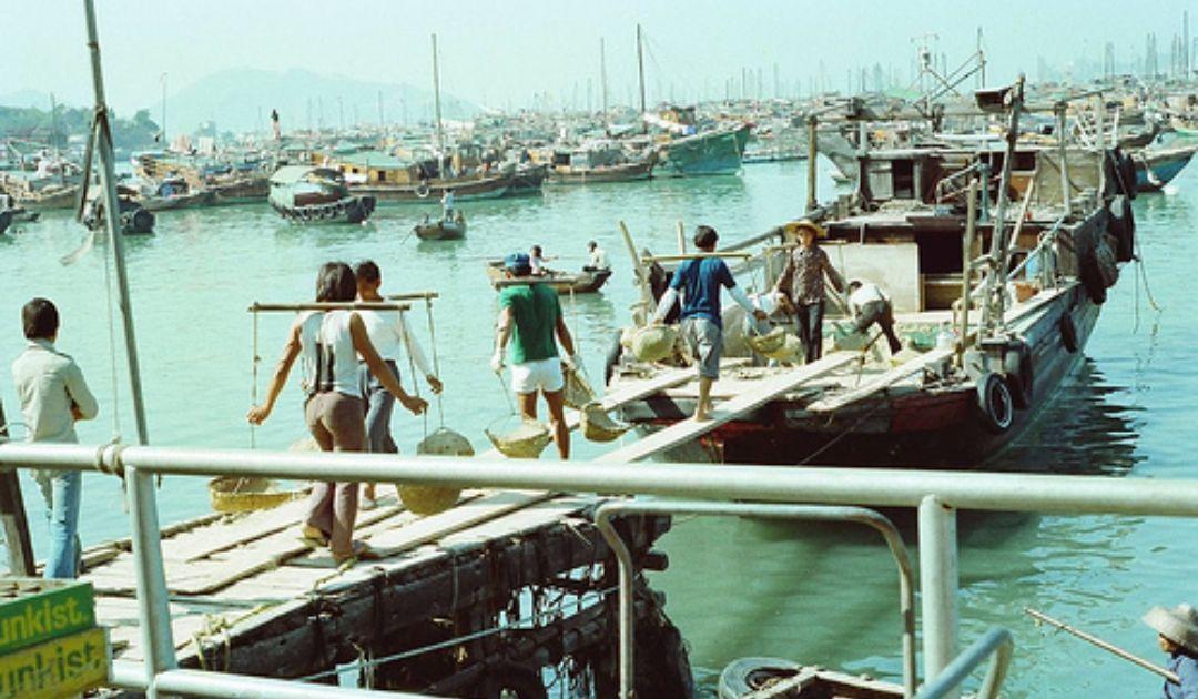 1978年的香港农村:有耕作有休闲,节奏安逸