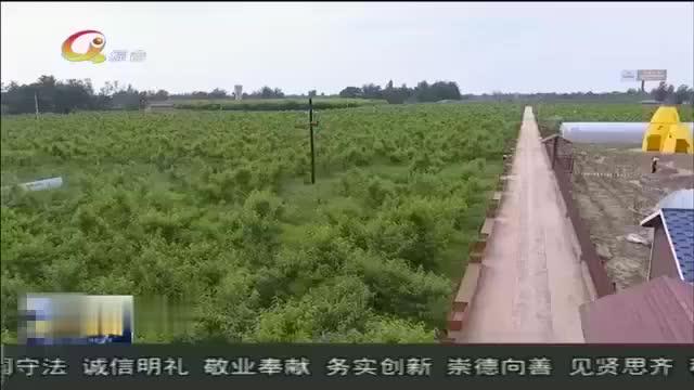 西峰区瓜菜种植面积达8.3万亩