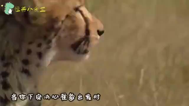 四五只鬣狗围攻平头哥蜜獾就你会掏肛镜头记录意外一幕