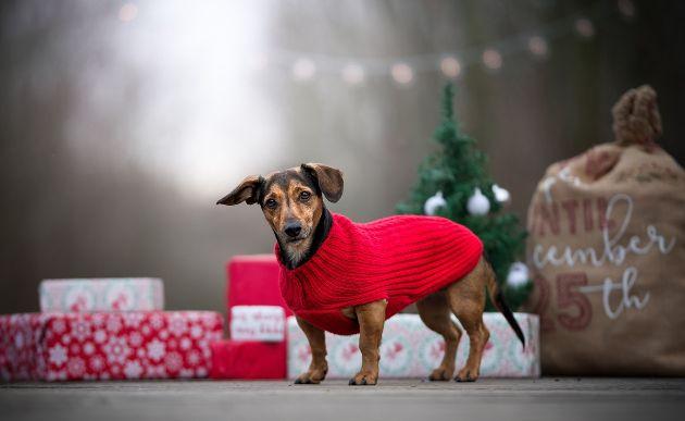萌趣狗狗清新壁纸_都是可爱的萌宠物