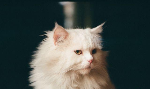 骄傲的猫咪拥有丰富细腻的情感,一旦开始养猫就请对它负责到底