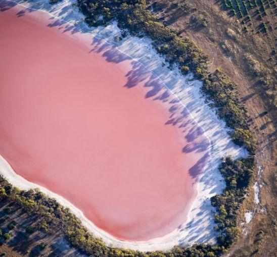 澳大利亚粉红湖,奇特、美丽、迷人,无人能准确解释为何呈粉色!