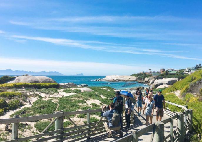 南非企鹅生态保护区,这里就是南非必游的景点之一!