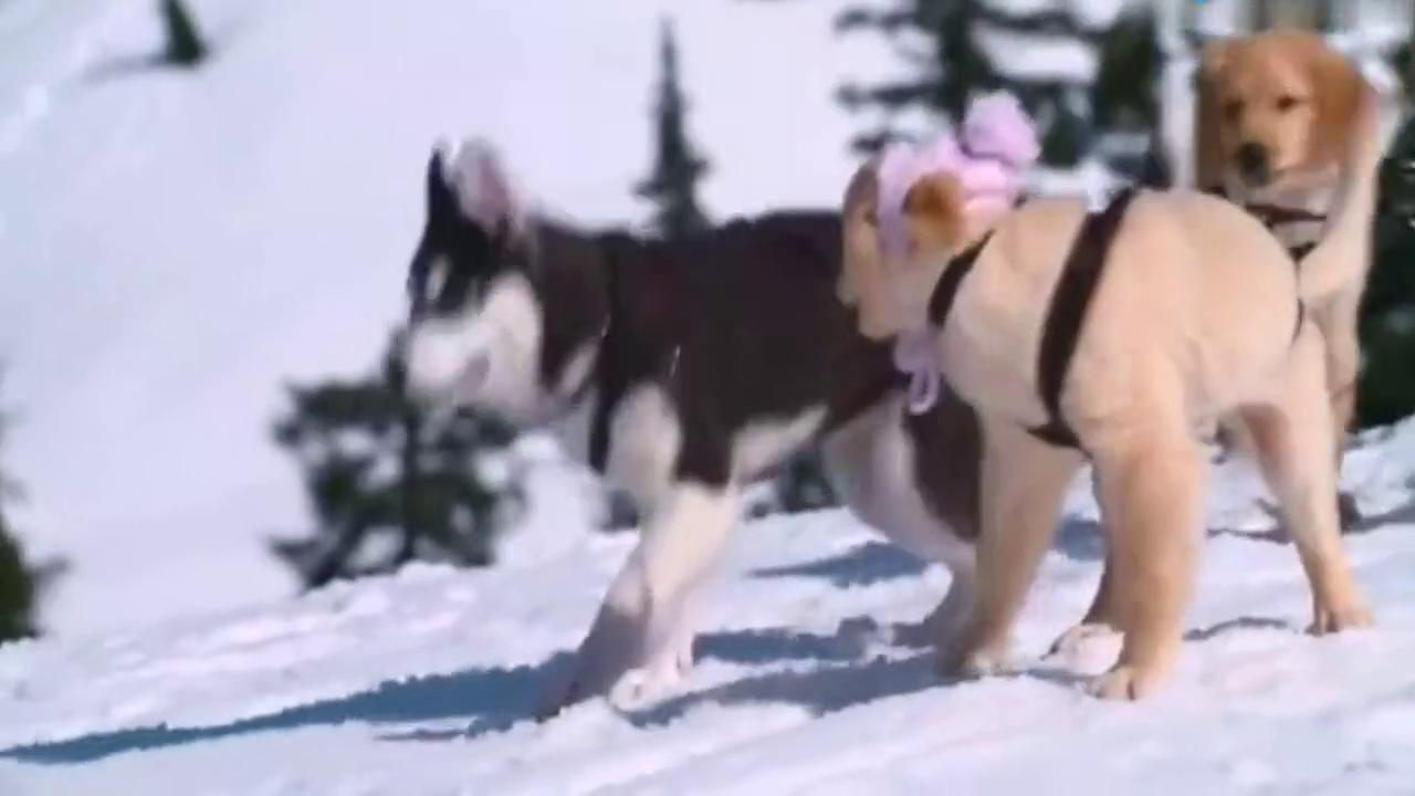 小主人做雪橇,小狗狗跑来跑去拿工具,可爱又聪明