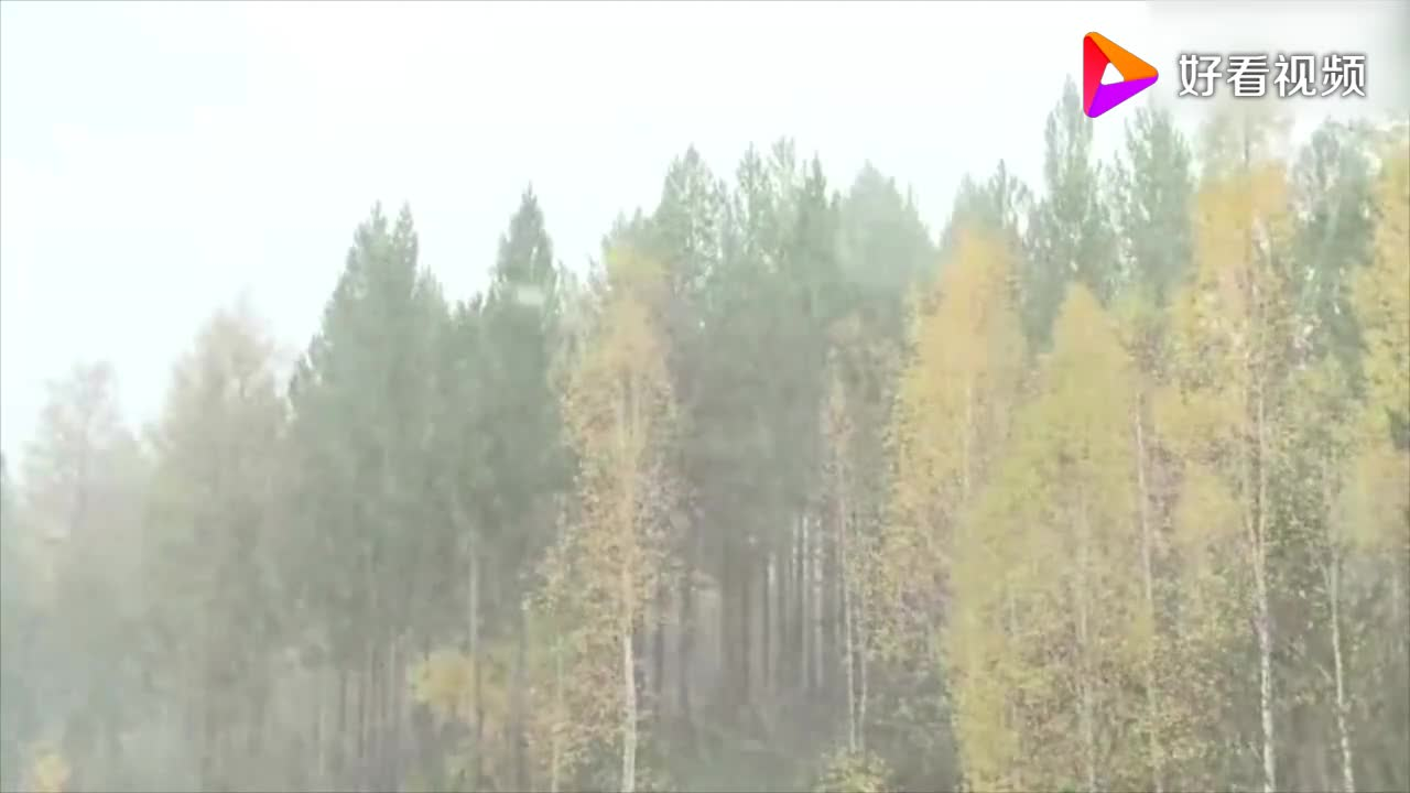实名羡慕黑龙江漠河市多地出现入秋后首场降雪 宛如童话世界