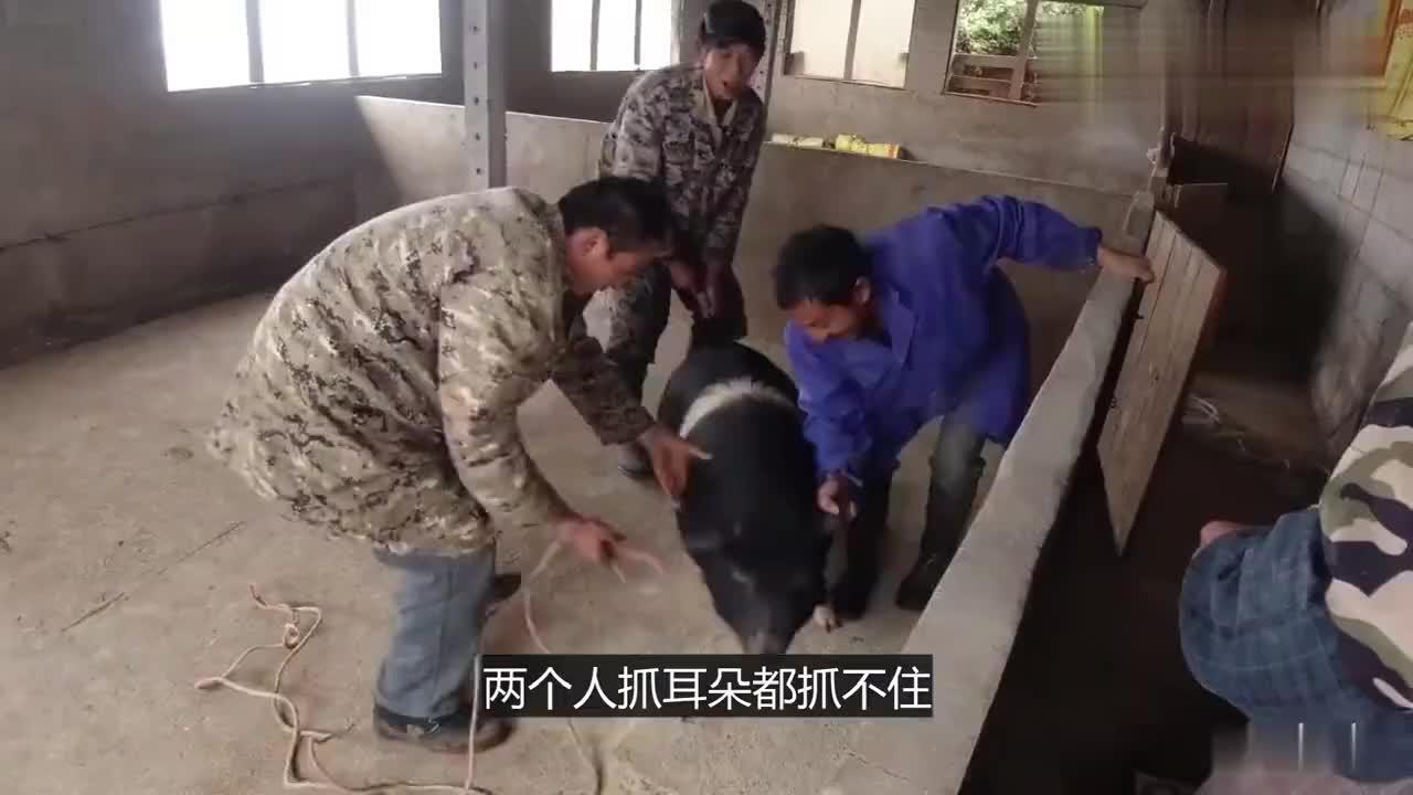 湖南农村杀猪视频1000自有一套方法厉不厉害你们说了算