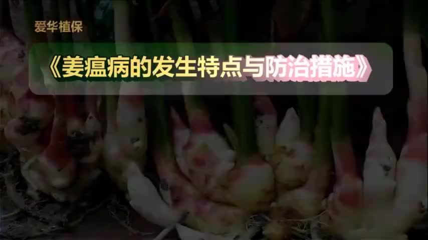 如何防治生姜的姜瘟病?
