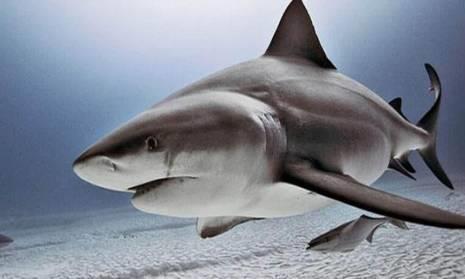 软骨很好吃,海鲜的软骨更好吃,还是鲨鱼的呢!