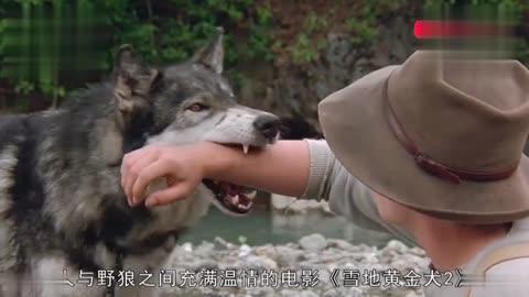 猎人们将狼伪装成狗在斗兽场里称王因为没有肉吃遭毒打