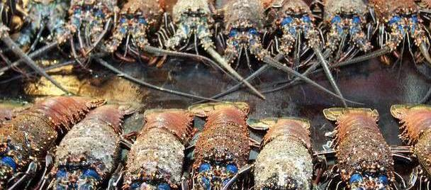 没有外交国防的岛国,芒果任吃鲍鱼龙虾没人要,秒杀马代对华免签