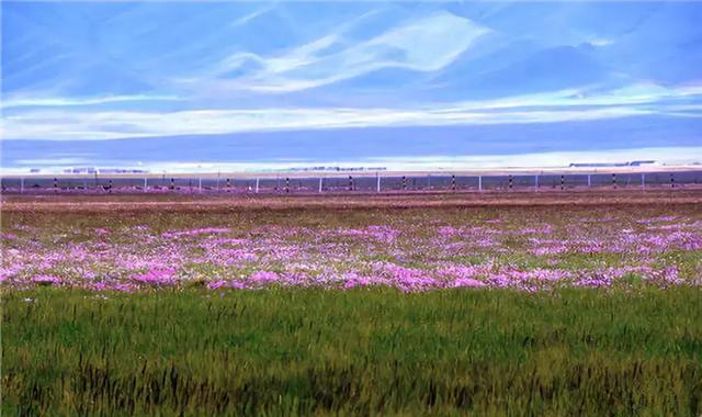 若尔盖花湖丨草原的眸子,心中的天堂
