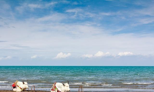 青海湖的美,不到眼前是体会不到的,跟我一起近距离感受它的美
