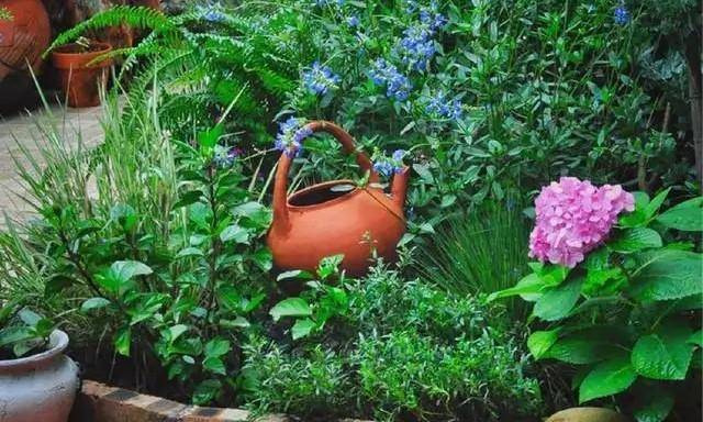 如果你喜欢园艺,需要懂得断舍离