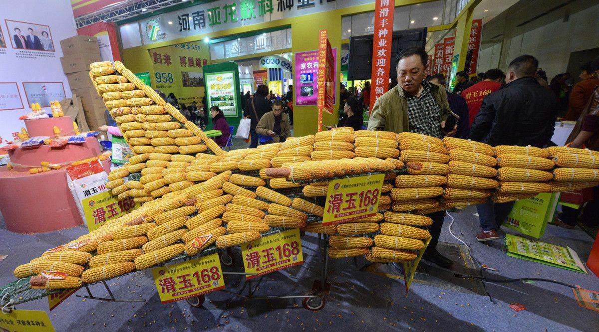 小麦大丰收,麦种经销商微利,农民得实惠