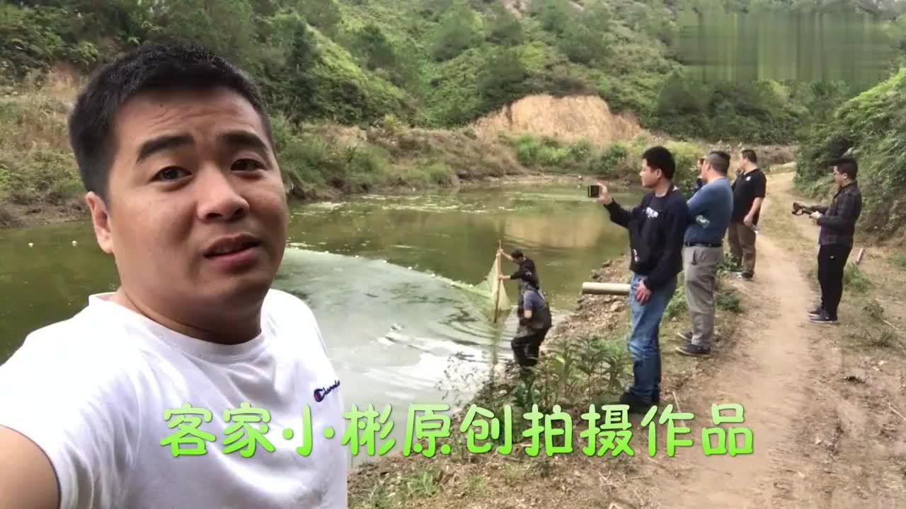 广东农村池塘捉到一条怪鱼鱼塘老板说要卖2万