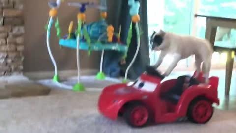 会开车的狗能打的过喵咪的狗还有会拌水泥的狗你都见过么