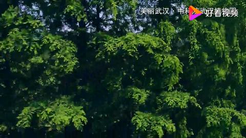 美丽武汉·中科院武汉植物园