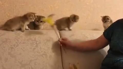 前方高能!一群可爱的小猫,好想抱走一只!