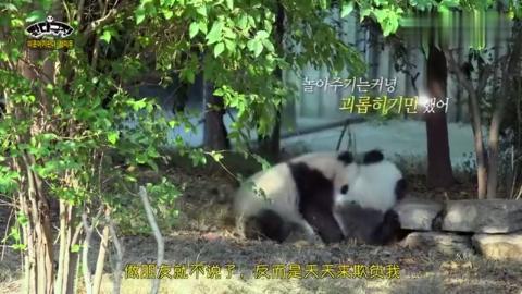 小熊猫竟说出大多数人的心声!世界这么大,却只有我一个孤零零的