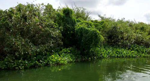 他们生活在风景优美的东南亚最大的淡水湖,在异国他乡艰难度日