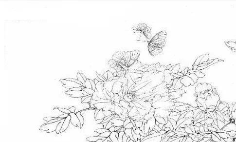 图文教程   工笔画牡丹《名花倾国》的绘制步骤解析
