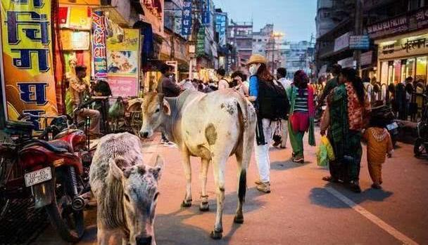 印度人来中国游玩,首次坐火车,这个行为让列车员都看呆了